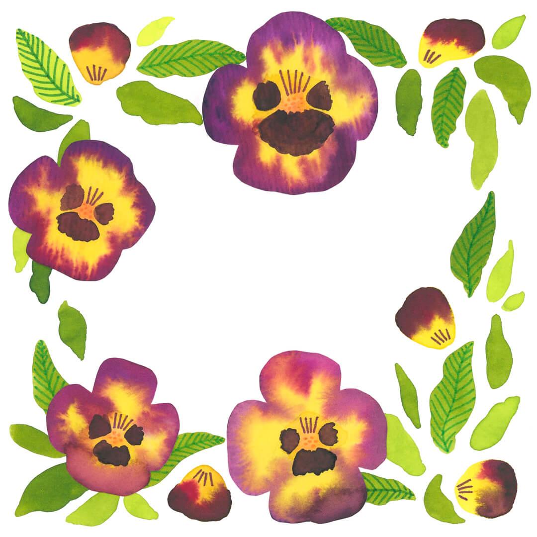 Sanne Bruinsma Illustraties & Vormgeving kaart viooltjes waterverf bloemen vierkant illustratie botanisch