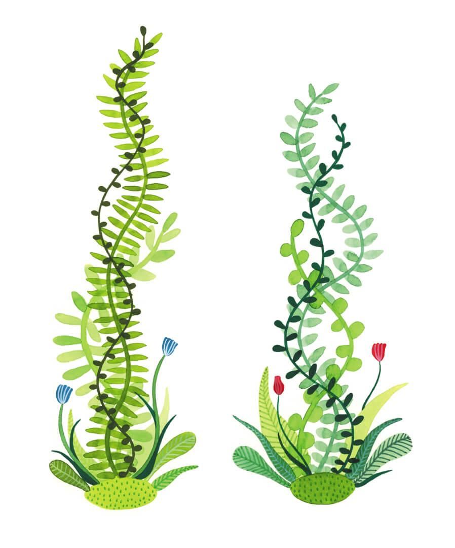 Sanne Bruinsma Illustraties & Vormgeving botanisch illustratie planten natuur bloemen bladeren groen
